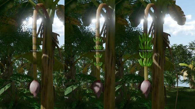 EtP-Ripe-Banana1