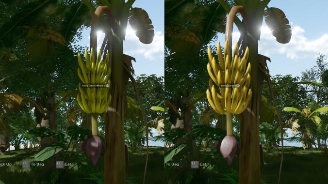 EtP-Ripe-Banana2