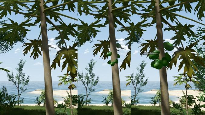 EtP-Ripe-Papaya1